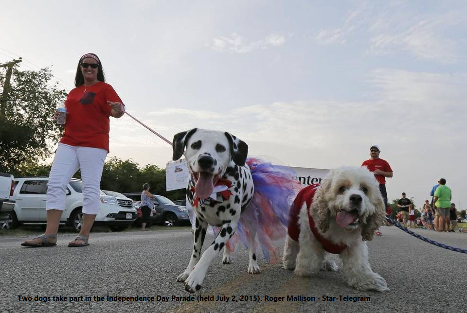 07022015 Independence Day Parade Dogs